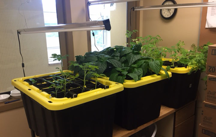 A photo of the hydroponic units