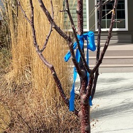 Teachers make thank you posters and tie blue ribbons outside in acknowledgement of the efforts put forth by their colleagues on the front lines.