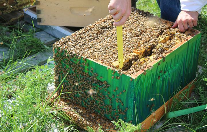 Initiative apicole à l'Établissement de Collins Bay