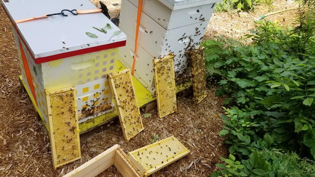 Quatre couches de colonies d'abeilles.